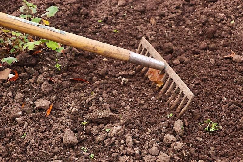 Il terreno del nostro orto potrebbe essere contaminato