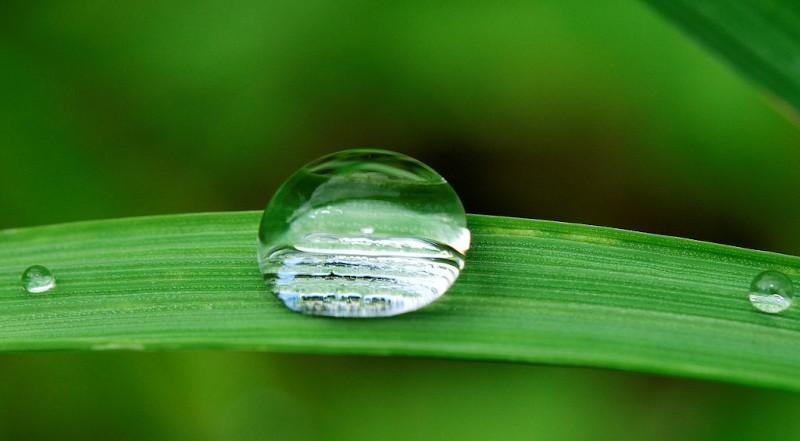 Quando irrigare il giardino