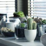 Cura delle piante da interno: i principali rischi da evitare