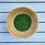 Moringa oleifera: come essiccare le foglie e trasformarle in polvere
