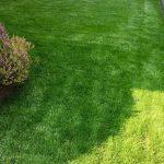 Quanto costa la manutenzione di un giardino? Ecco le spese del 2019