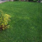 Quanto costa la manutenzione del giardino di casa? Ecco le spese del 2018