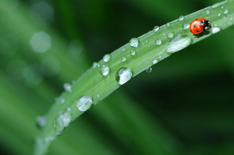 Impianti di irrigazione domotici a gestione remota