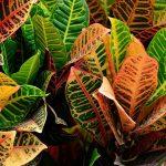 Le piante che purificano l'aria: un argomento troppo spesso trascurato