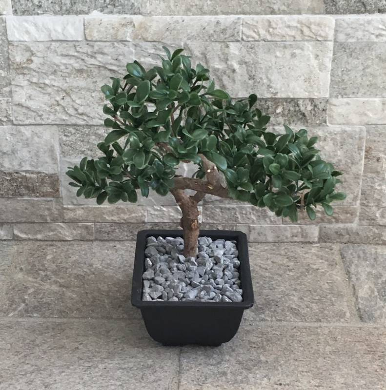Bonsai morto recuperato